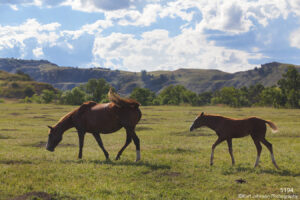 wildlife animals horses landscape