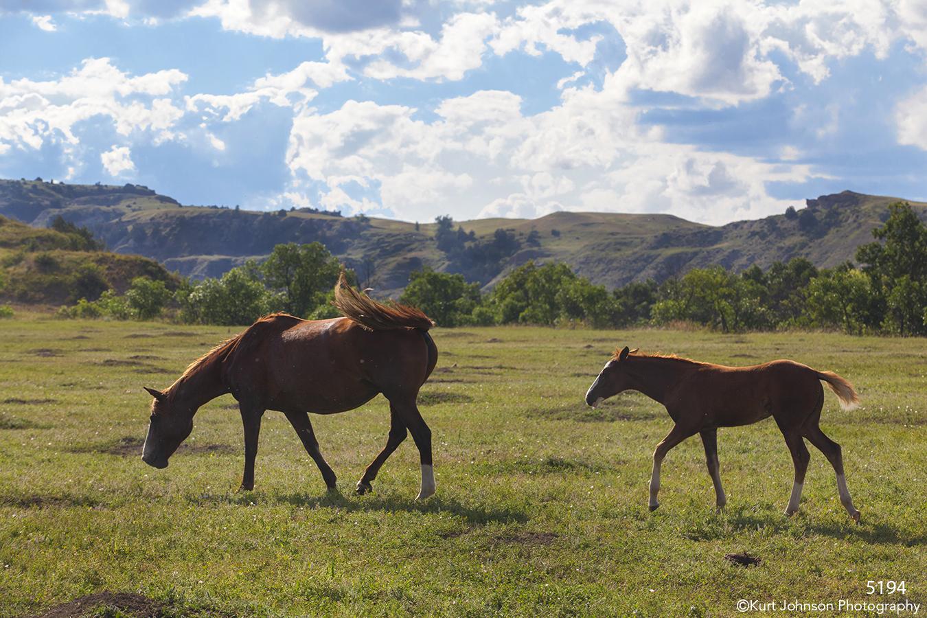 wildlife animals horses landscape