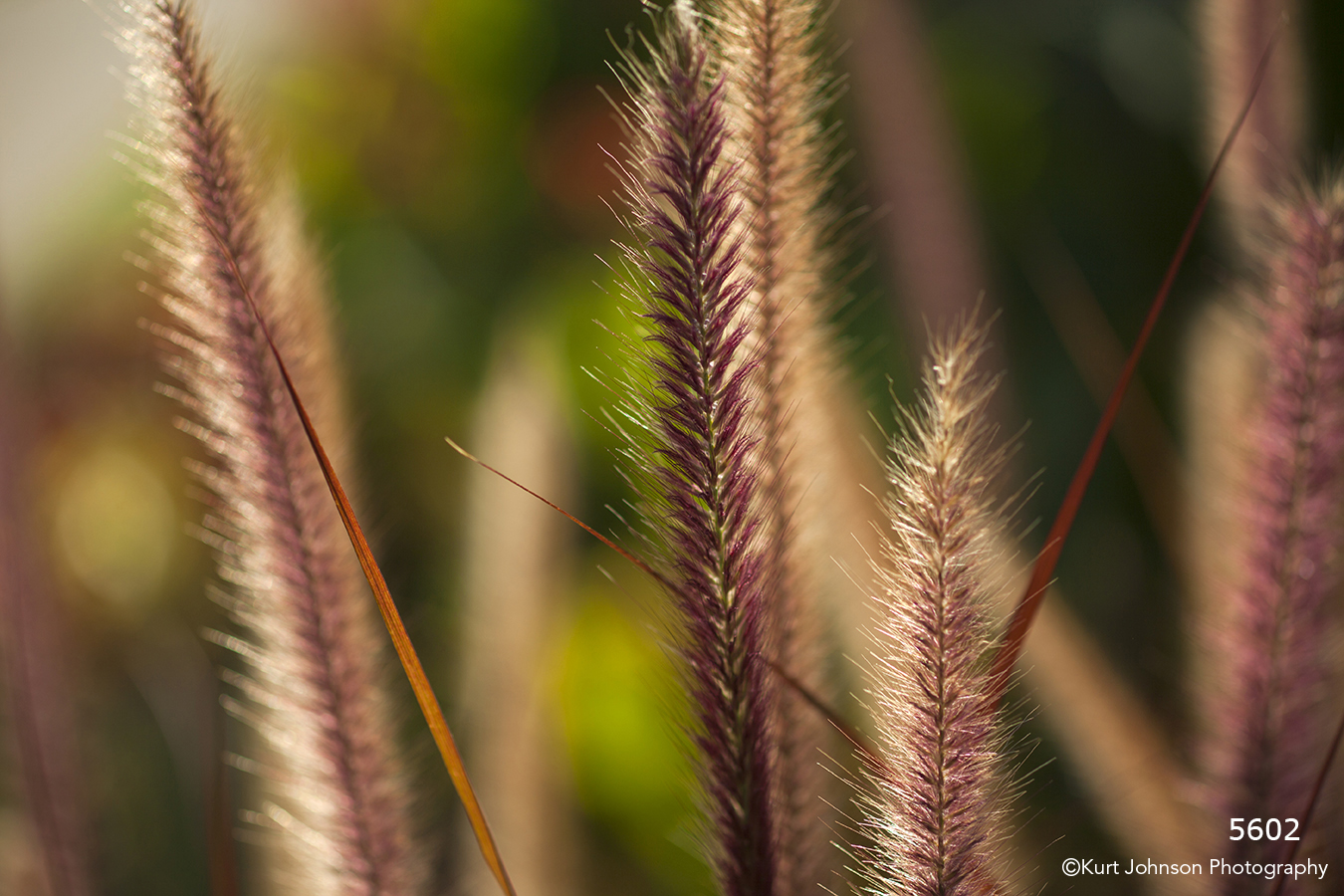 red earthtones grasses texture