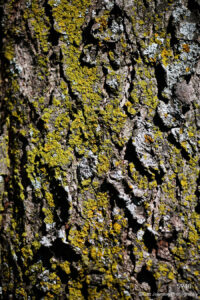 texture green wood bark earthtone