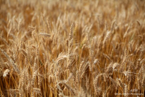 orange brown earthtones wheat grasses