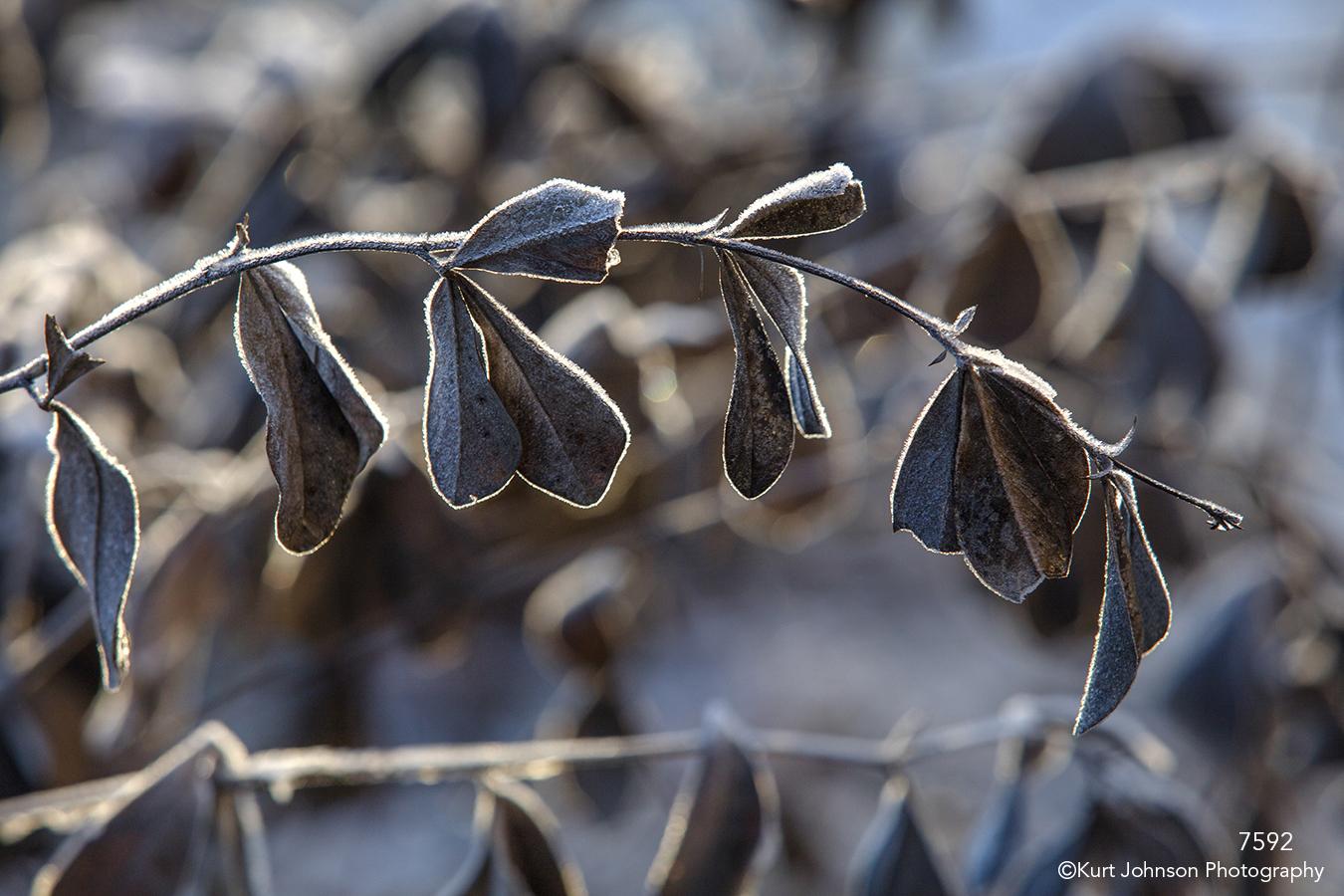 leaves brown earthtones ice