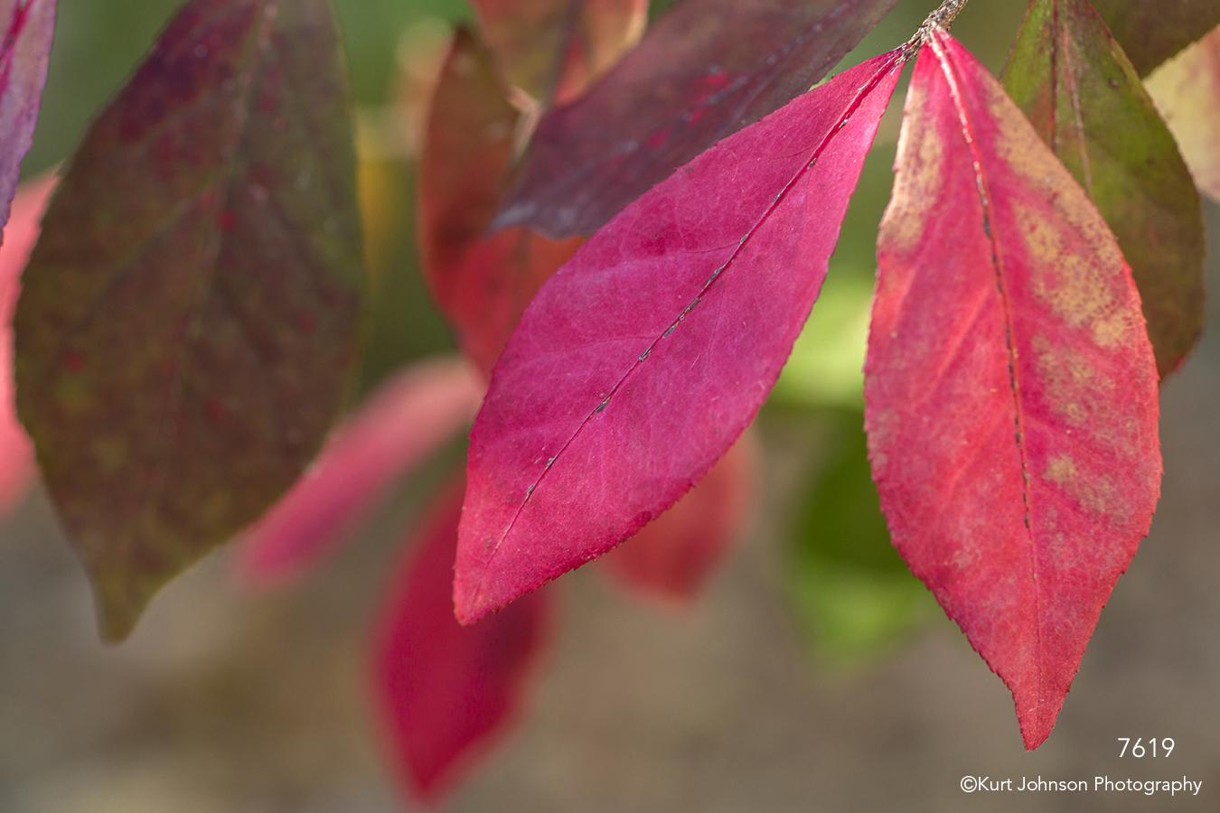 leaves red tree leaf branch