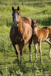 wildlife animals horses baby
