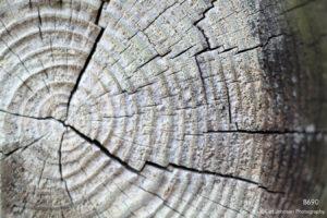 texture wood brown earthtones