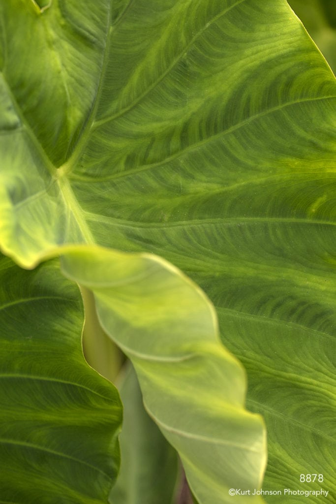 green leaf texture lines
