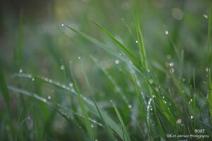 grasses green raindrops