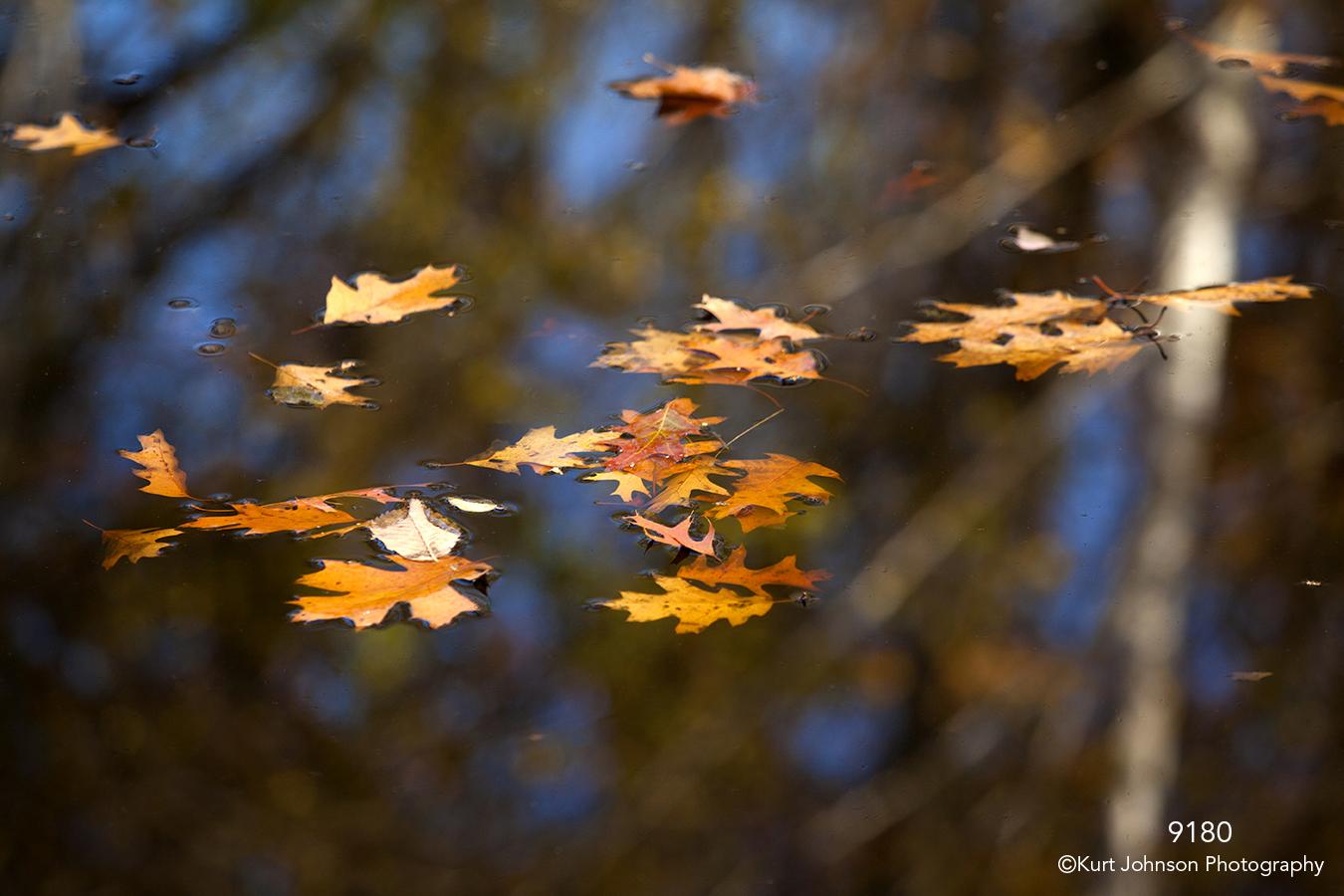 leaves water floating orange blue