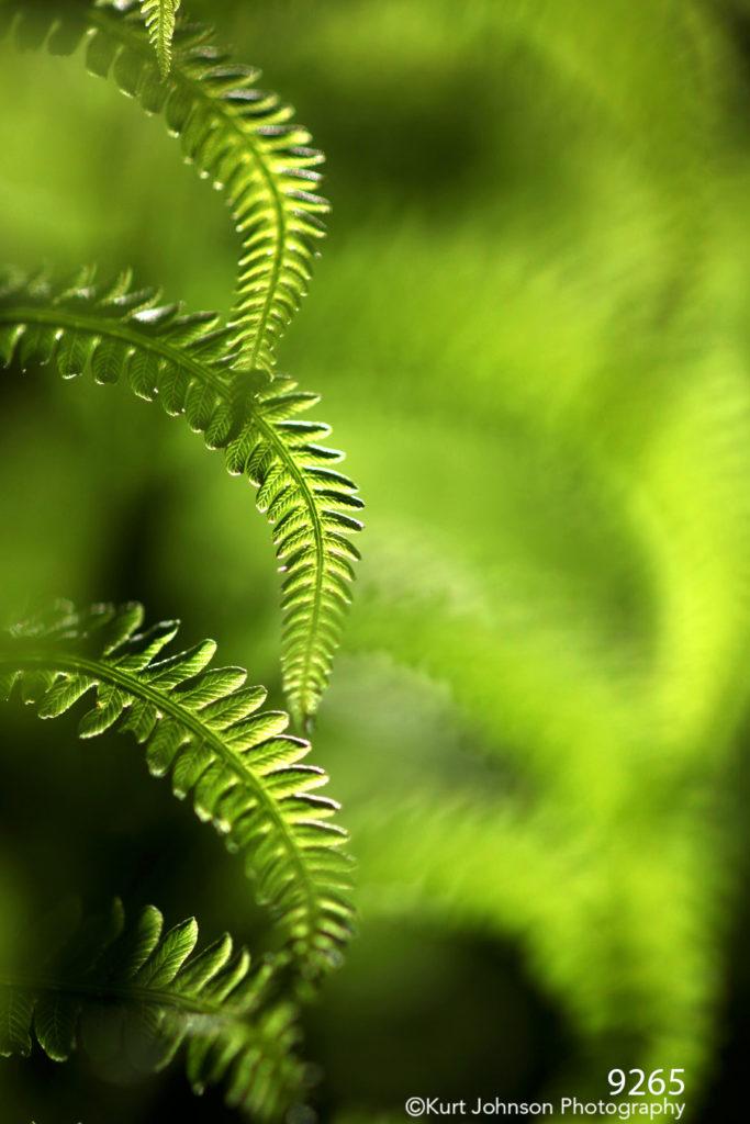 grasses green yellow texture
