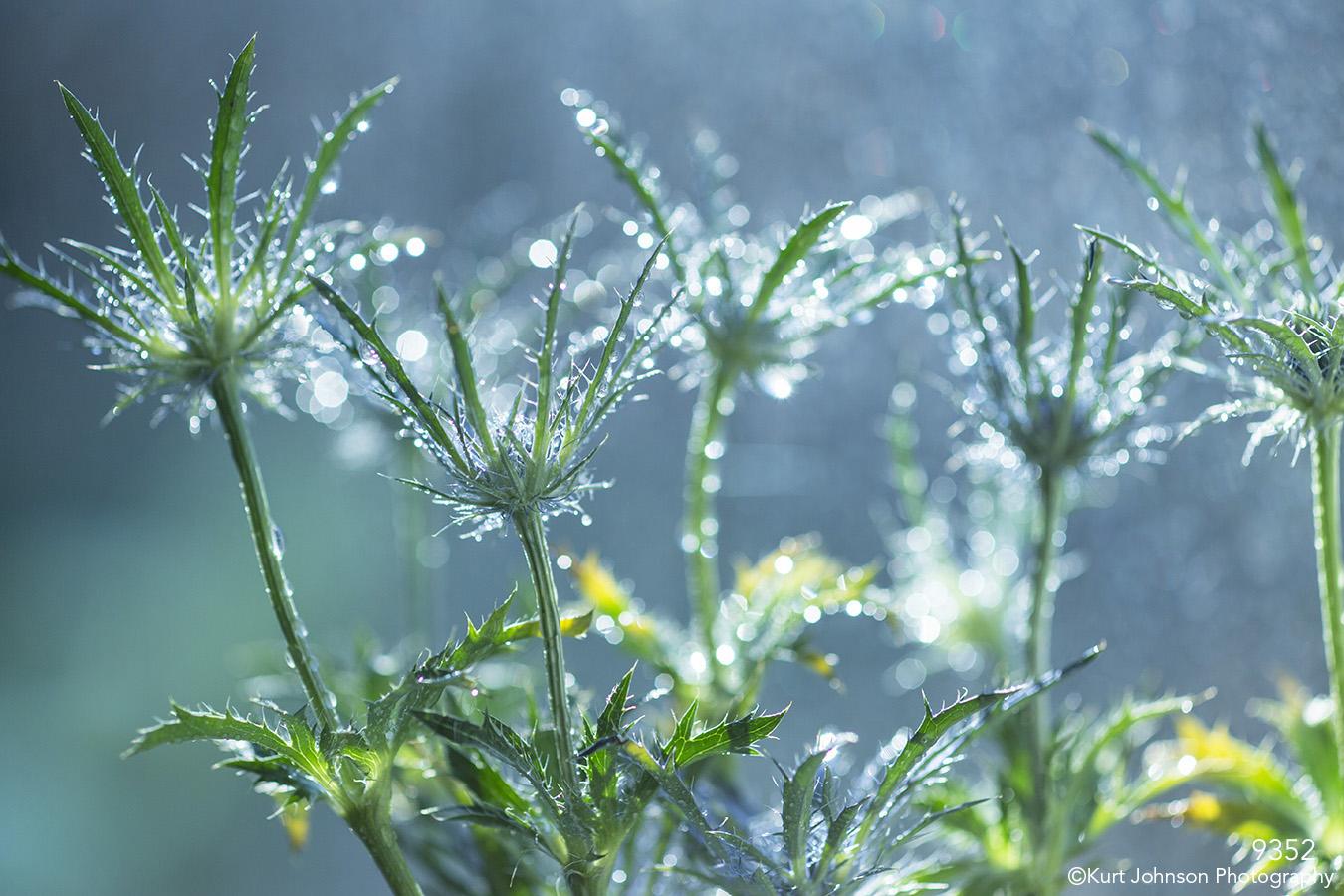 grasses green blue raindrops texture