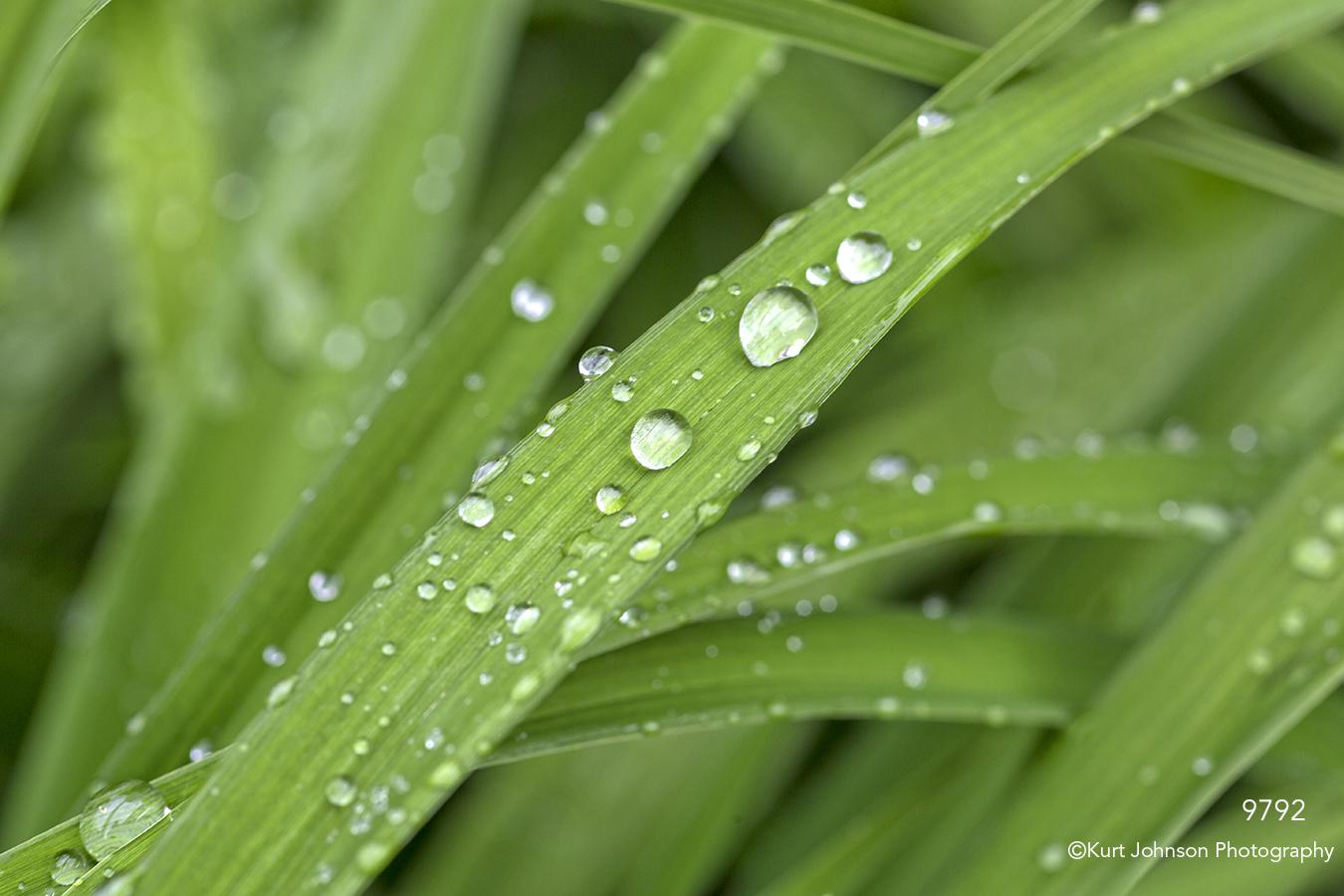 grass grasses green raindrops