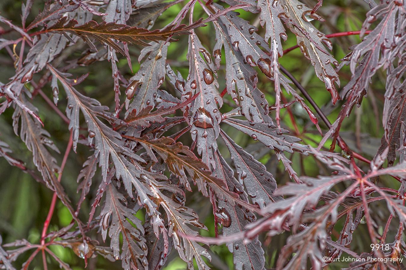 leaves red purple rain drops texture