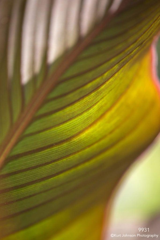 leaf leaves green orange yellow