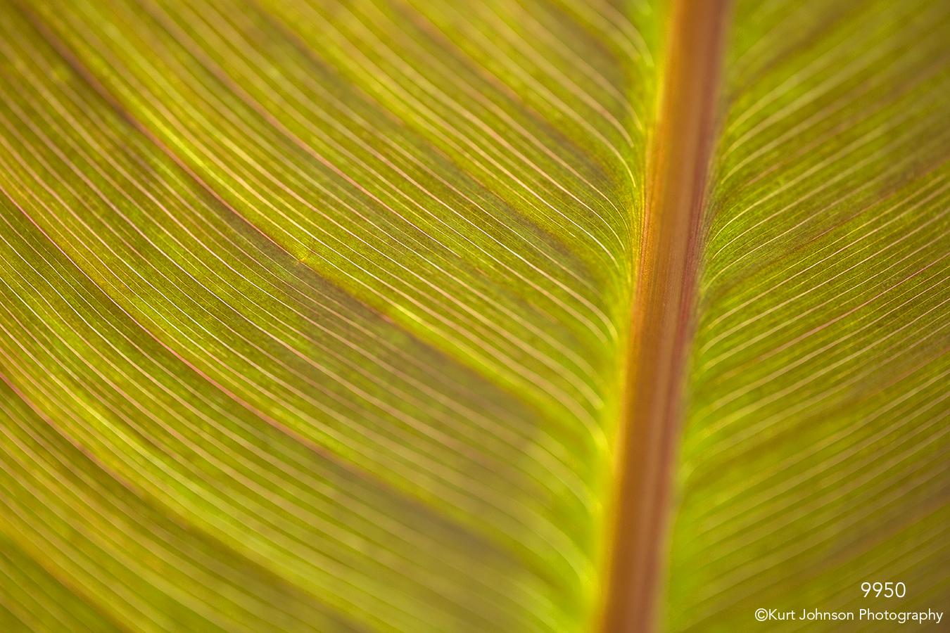 leaf leaves detail texture yellow orange