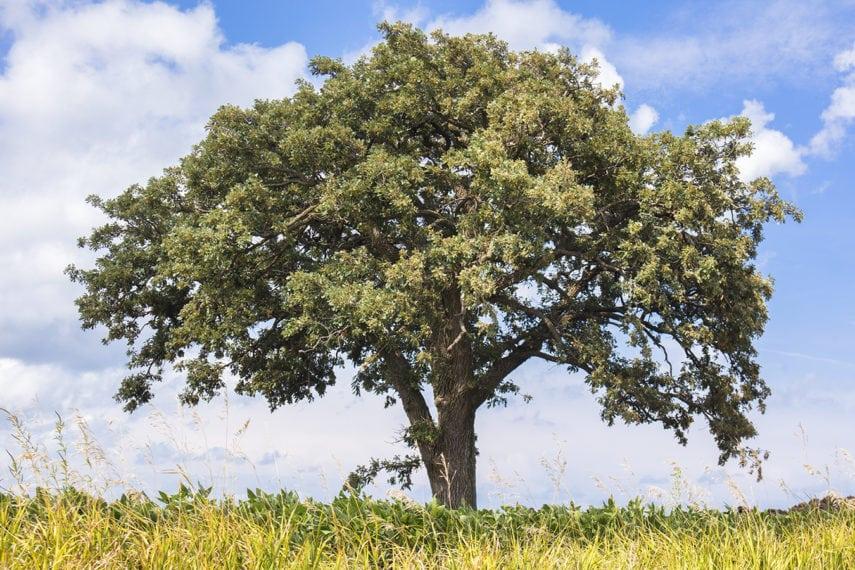 single tree landscape photograph