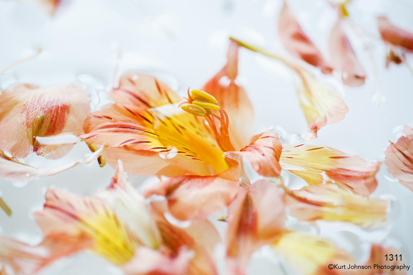 flower flowers petals water orange