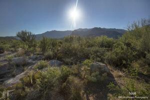 landscape desert light sun grasses cactus southwest