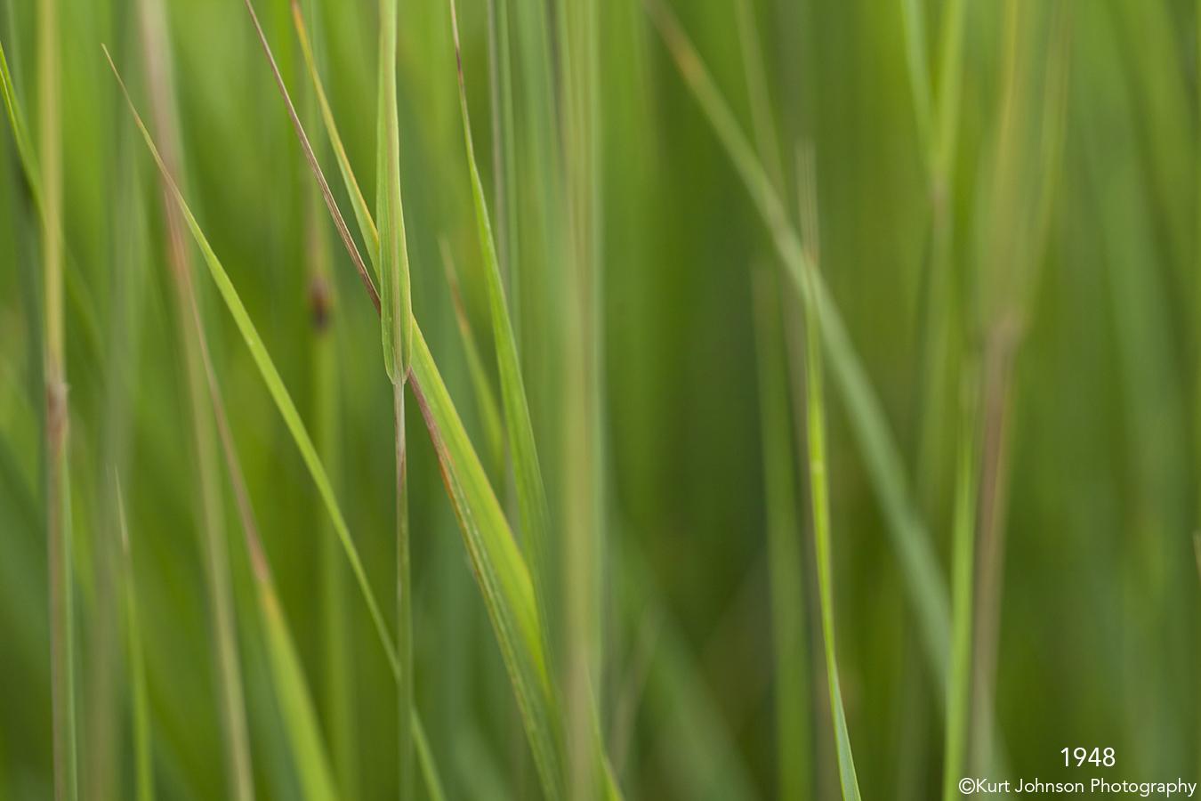 green grass grasses