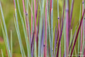 grasses green red