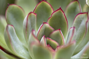 succulent green leaves southwest pacificcoast