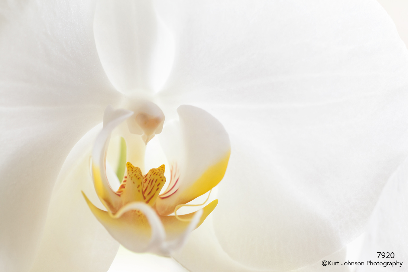 flower white orchid detail close up macro
