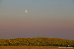 landscape sunflowers moon midwest sunset
