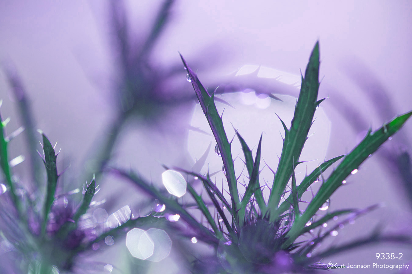 leaves purple abstract