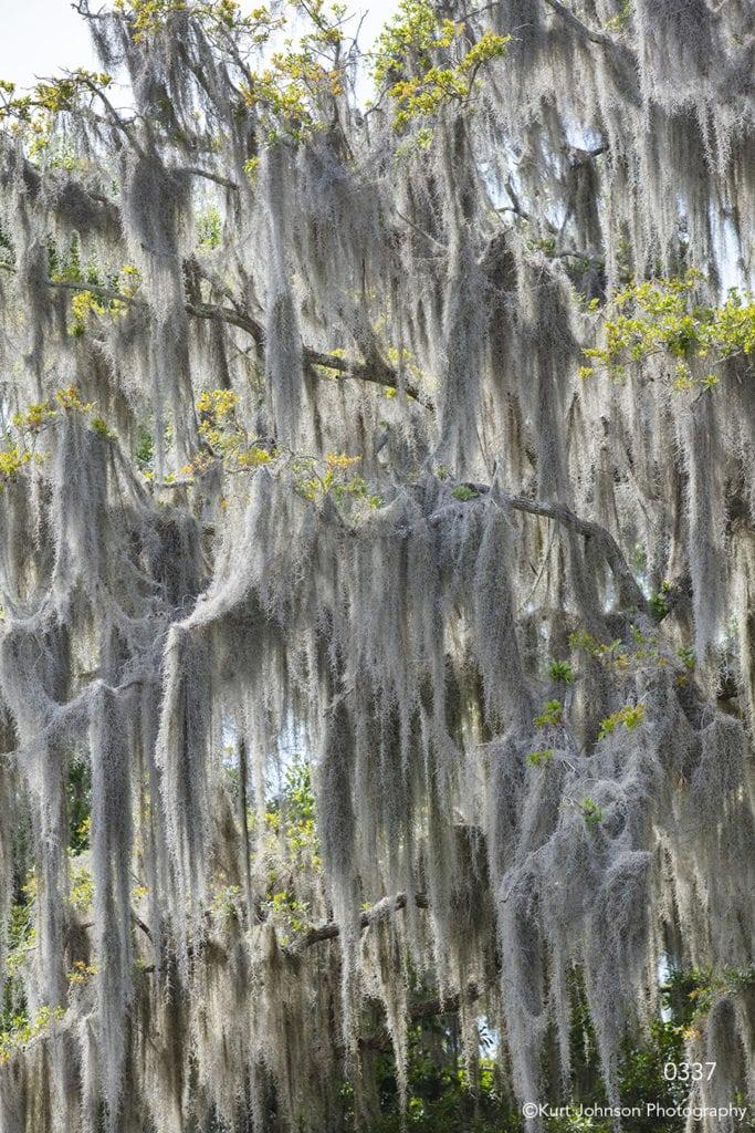 southeast moss tree landscape