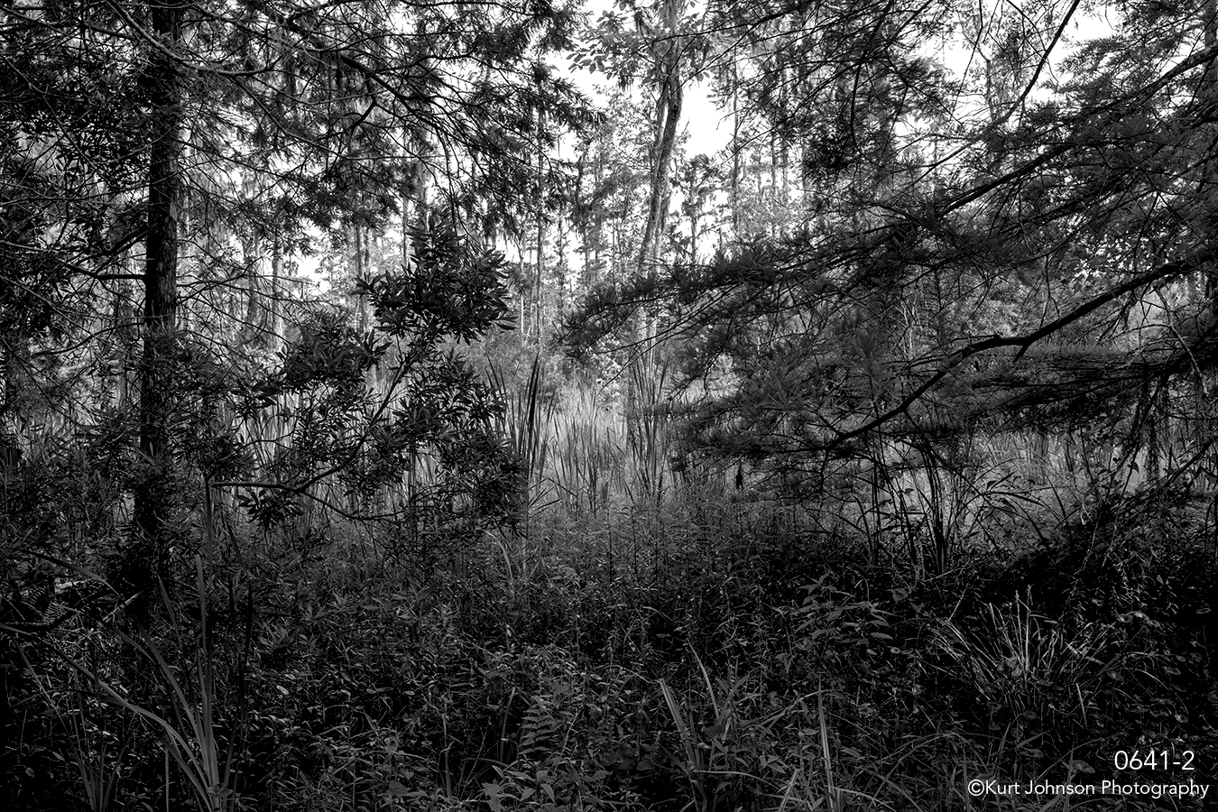 southeast moss tree landscape black and white forest