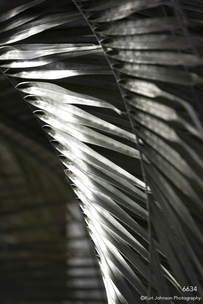 southeast leaf leaves tree palm