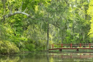 southeast moss tree landscape forest water bridge
