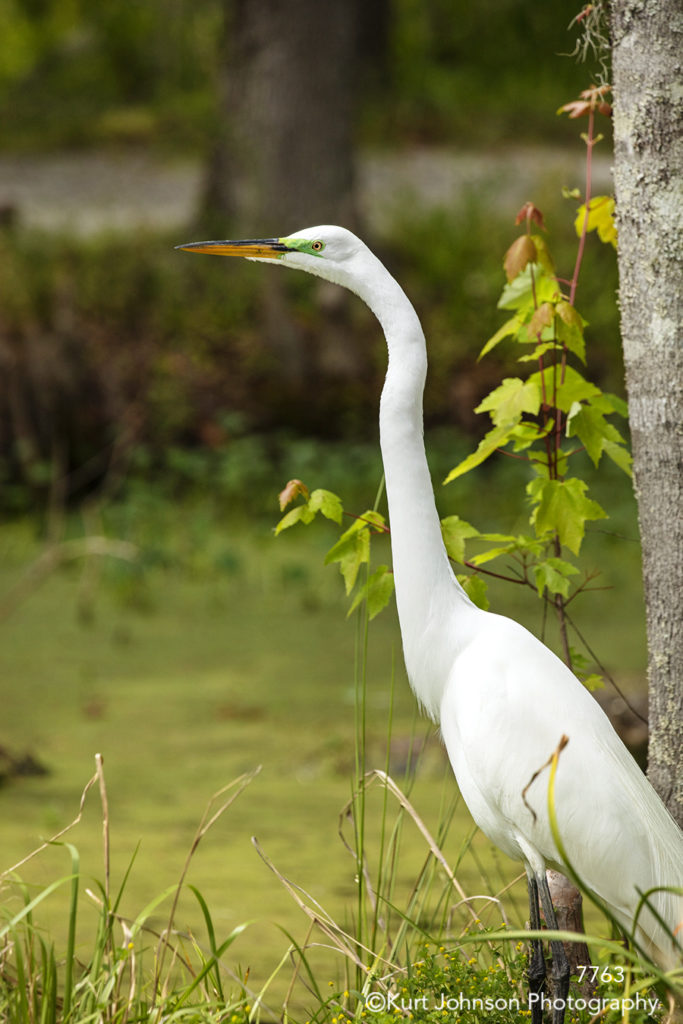 southeast wildlife water bird