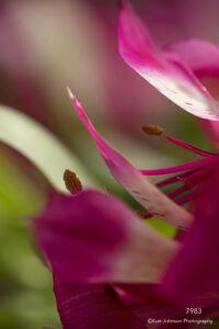 flower pink petals abstract