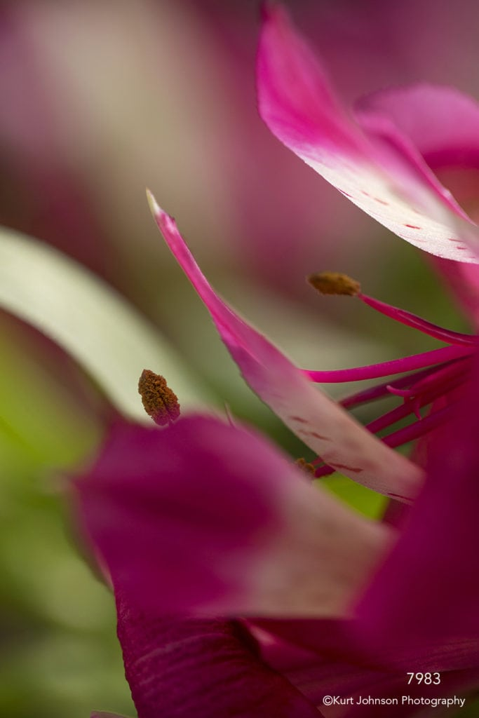 flower pink petals abstract