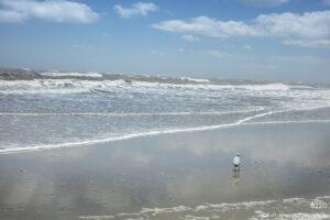southeast wildlife water bird landscape waves