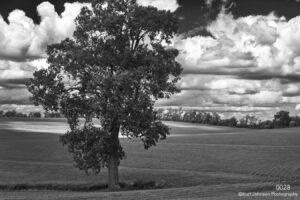 landscape black and white tree