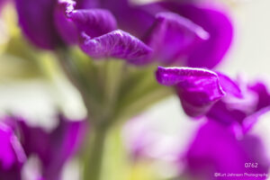 flower flowers purple green