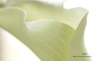 flower petals implied white texture