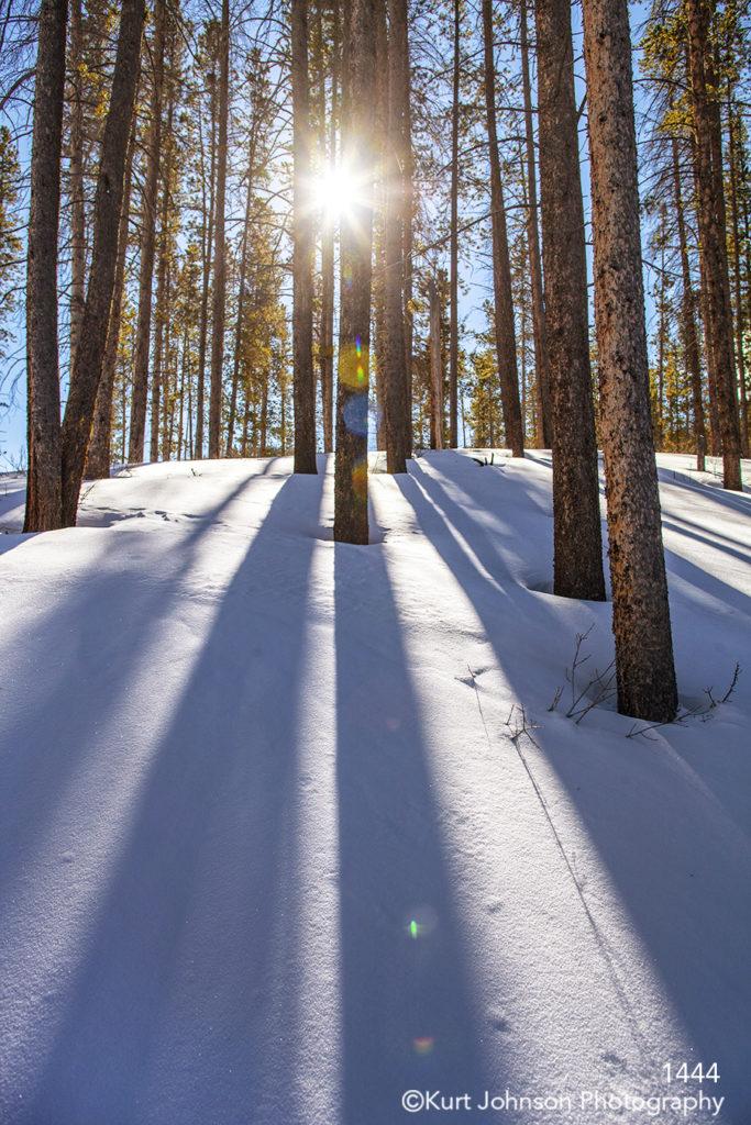 trees landscape winter snow pine trees colorado