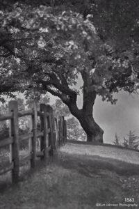 landscape black and white tree fence