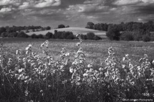 landscape black and white flowers flower