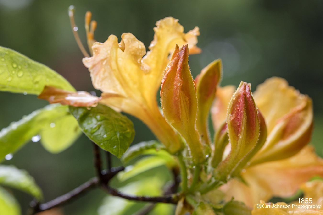 flower flowers orange flowering tree raindrops