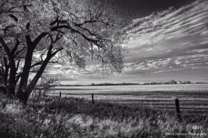 landscape black and white tree trees fence