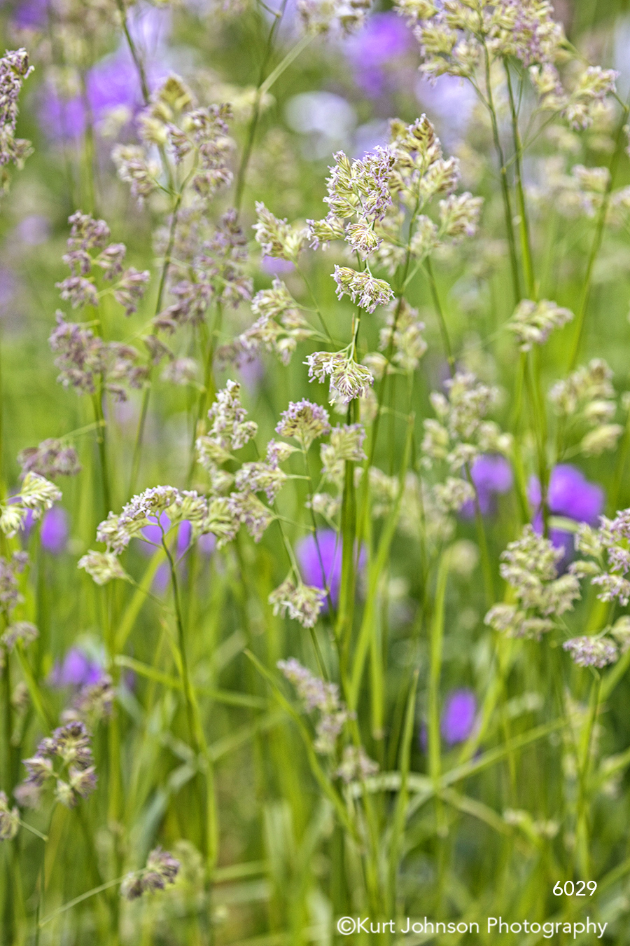 flower flowers white green