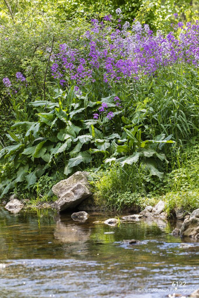 flowers landscape water purple