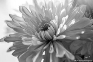 flower black and white
