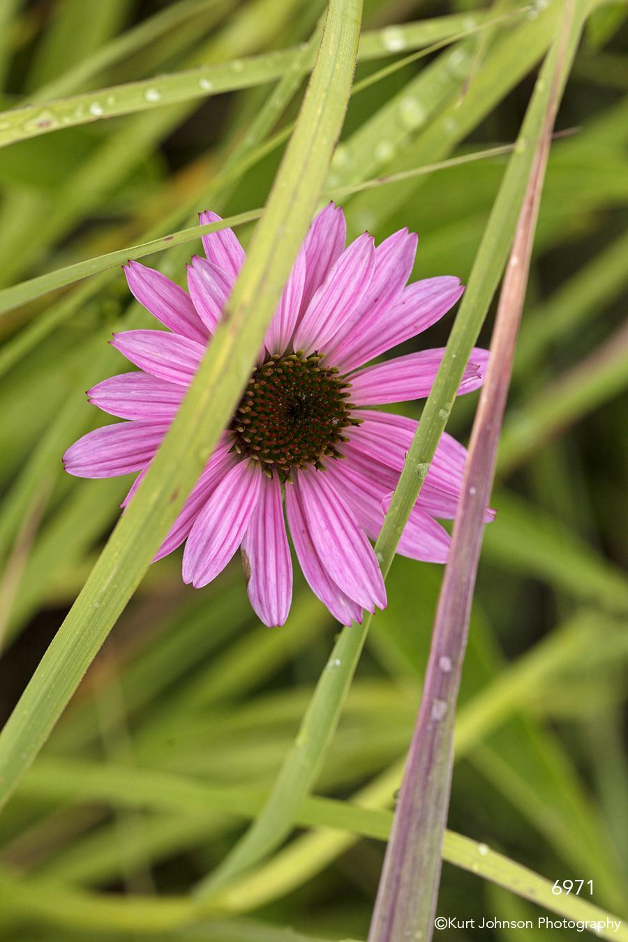 flower grasses purple daisy