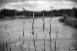 landscape black and white water grasses grass