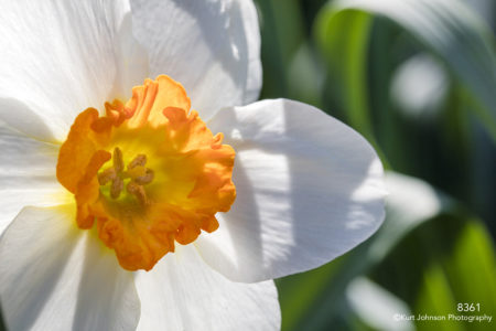white flower yellow center macro close up