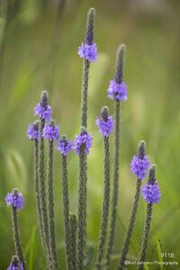 purple flower flowers green